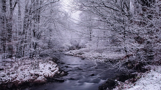 Wintry scene of a stream and trees in Allegany State Park