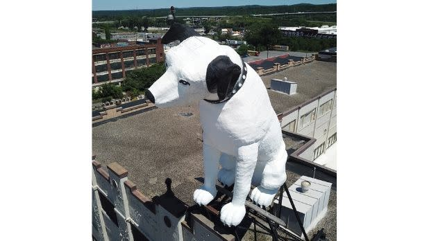 A giant Nipper dog on top of a building in Albany