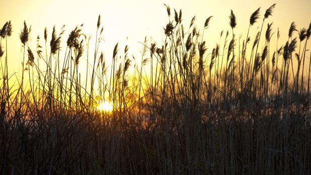 Sunrise at Captree State Park