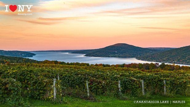 A sunset view of Canandaigue Lake with Finger Lakes vineyard in foreground