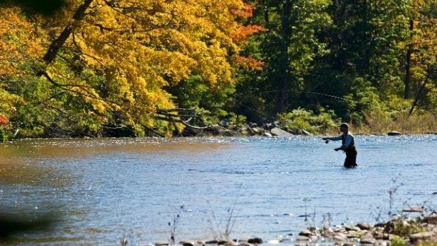 A man fly fishes in fall in the Catskills