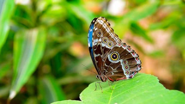 Joseph L. Popp, Jr Butterfly Conservatory 654