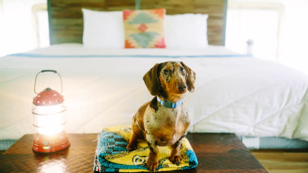 Pet-Friendly New York State Getaways | Activities & Parks