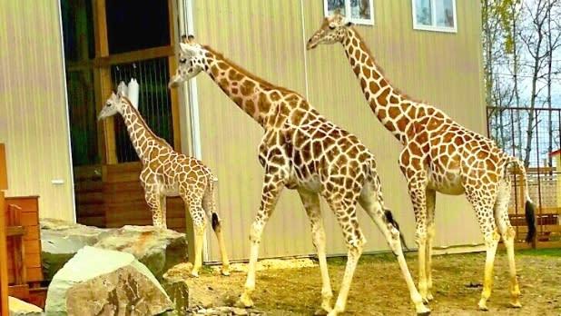 Animal Adventure Park