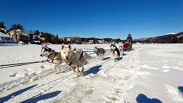 Dogs pulling a dog sled across the snow in the Adirondacks