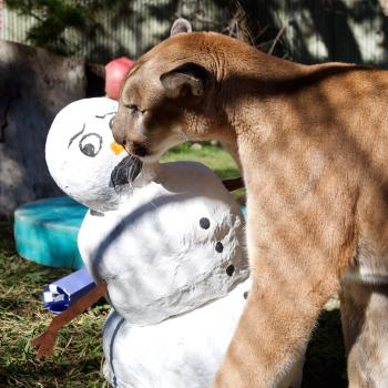 OC Zoo Mountain Lion and Snowman Christmas