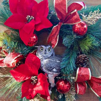 OC Zoo Owl in Wreath Christmas