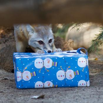 Fox with Present OC Zoo Christmas
