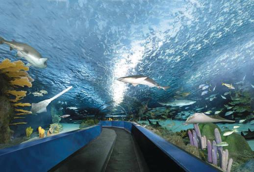 Ripley's Aquarium 340-ft long glide path tunnel