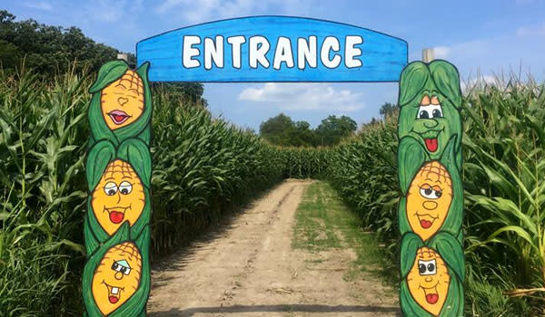 Corn Maze County Line Orchard