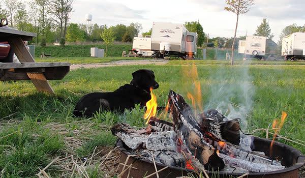 Dog sitting by Campfire in northwest Indiana campground