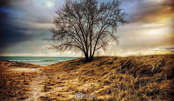 Tree at Marquette Park by nikibaz
