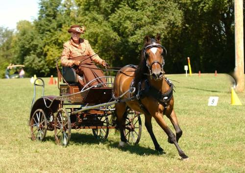 Cowboy Country Horse Driving Trial