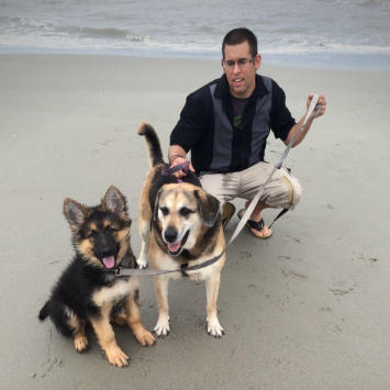 Man with 2 dogs on leashes on the beach