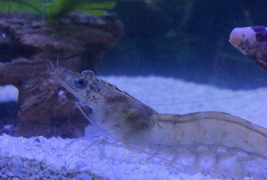 JT Shrimp LLC