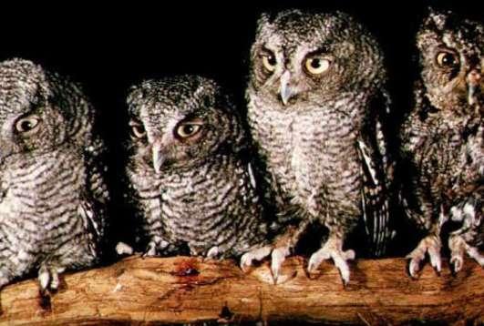 Birding with Indiana Audubon Society