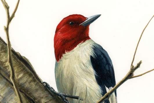 """Birds of the Great Marsh"" Exhibit by Kristina Knowski"
