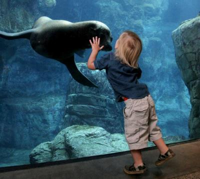 A young boy gets up close and personal with a sea lion at the Aquarium of the Pacific in Long Beach. Photo courtesy of Aquarium of the Pacific
