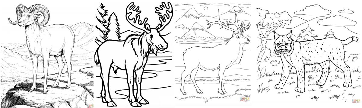wildlife coloring page banner