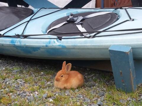 A bunny sitting by a kayak on land