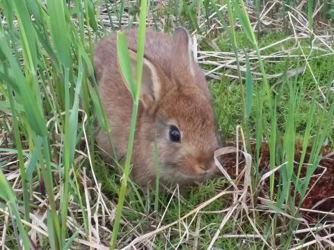 A bunny hides in grass