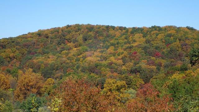 Gum Spring Blue Ridge Parkway - Fall Photo