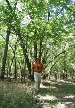 Chaplin Nature Center Tree Line