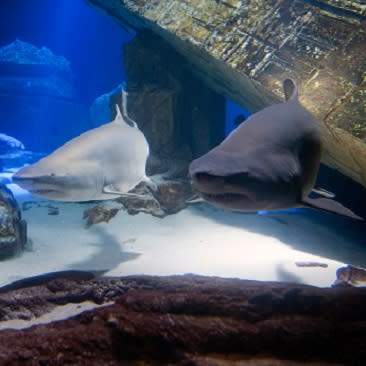 sharks at Long Island Aquarium