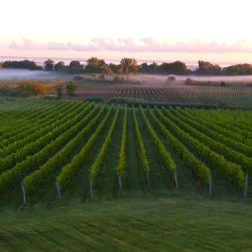 Arrowhead Spring Vineyards - Photo provided by Arrowhead Spring Vineyards for Niagara Wine Trail USA