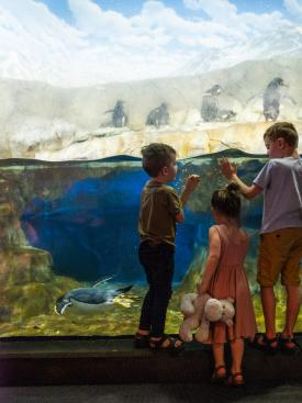 Good Grit_TN Aquarium_Caleb Chancey