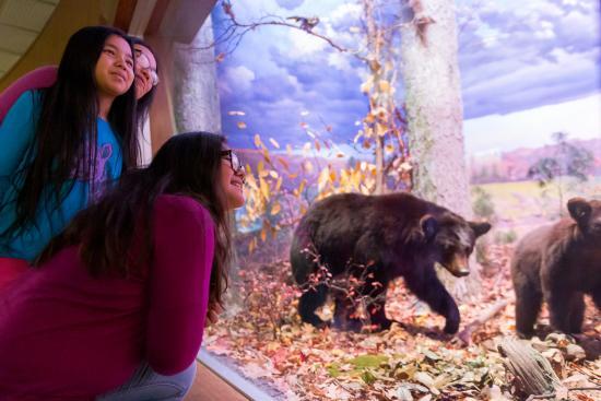 state-museum-of-pennsylvania-harrisburg-mammal-hall-black-bears