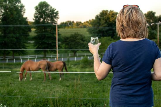 cassel-vineyards-of-hershey-wine-wineries-horses