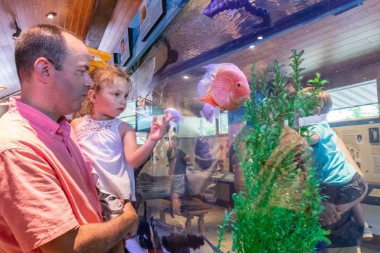 lake-tobias-wildlife-park-museum