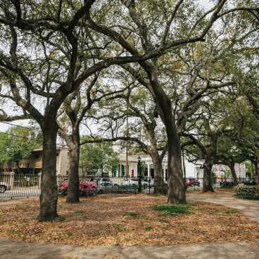 Washington Square Park- Marigny