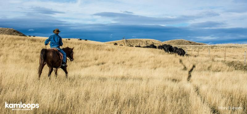 Ranchland in Kamloops