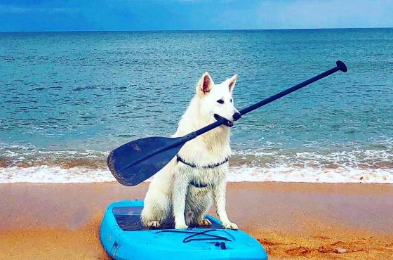 Pet-Friendly Beaches