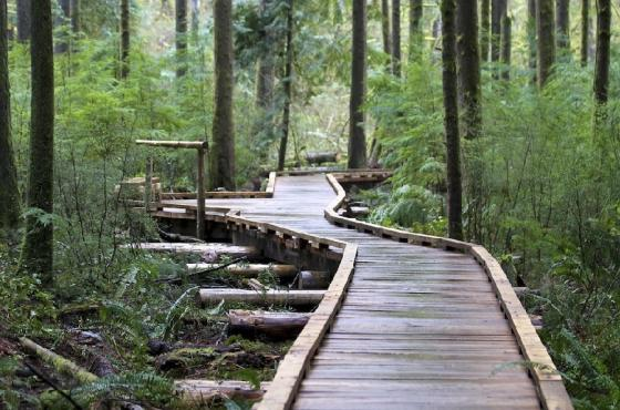 Grand Ridge Park Trail - Photo Courtesy King County Parks