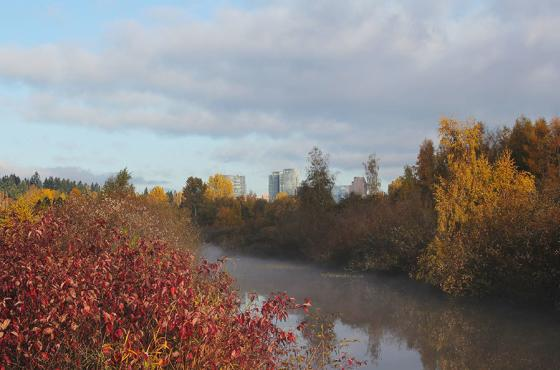 Mercer Slough Canal in Fall