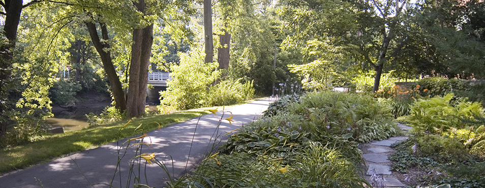 MSU Trail