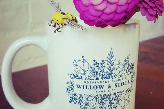 Willow and Stock