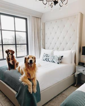 The Edwin Hotel_Pet Friendly