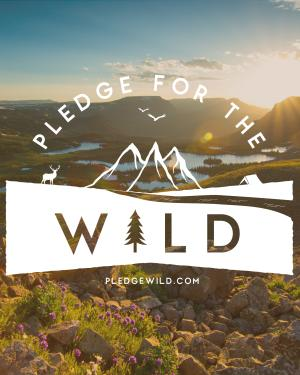 Pledge for the Wild