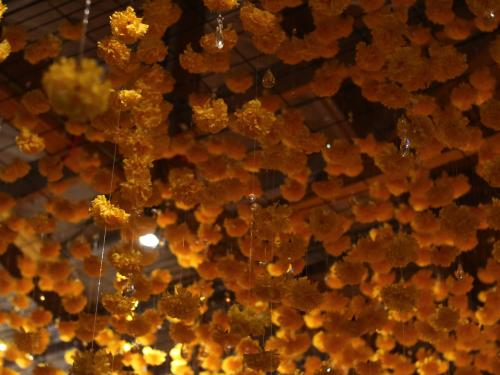 Hanging Marigolds at Happy Place