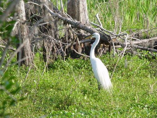 Bird at Barataria Preserve