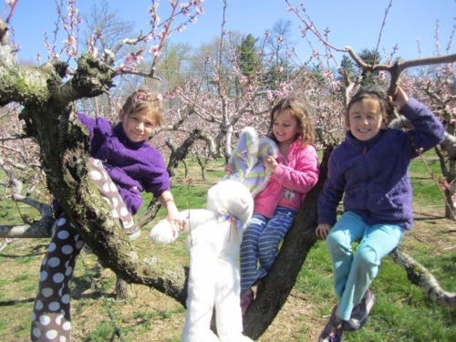 Three girls perched in a tree with a stuffed easter bunny