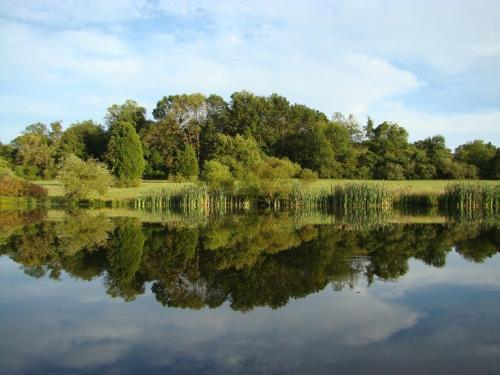 A lake with trees reflected in the water on a bright day
