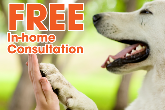 Free In-home Consultation