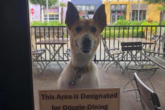 Dog Dining