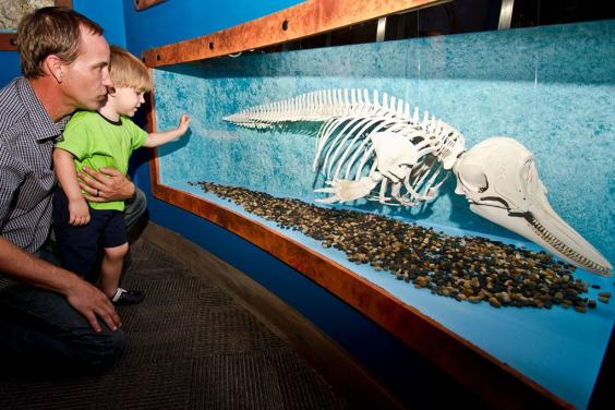 Explore Hundreds of Exhibits!