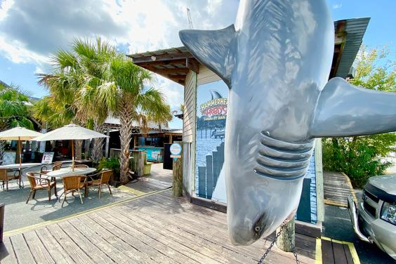 Hammerhead Fred's Shark